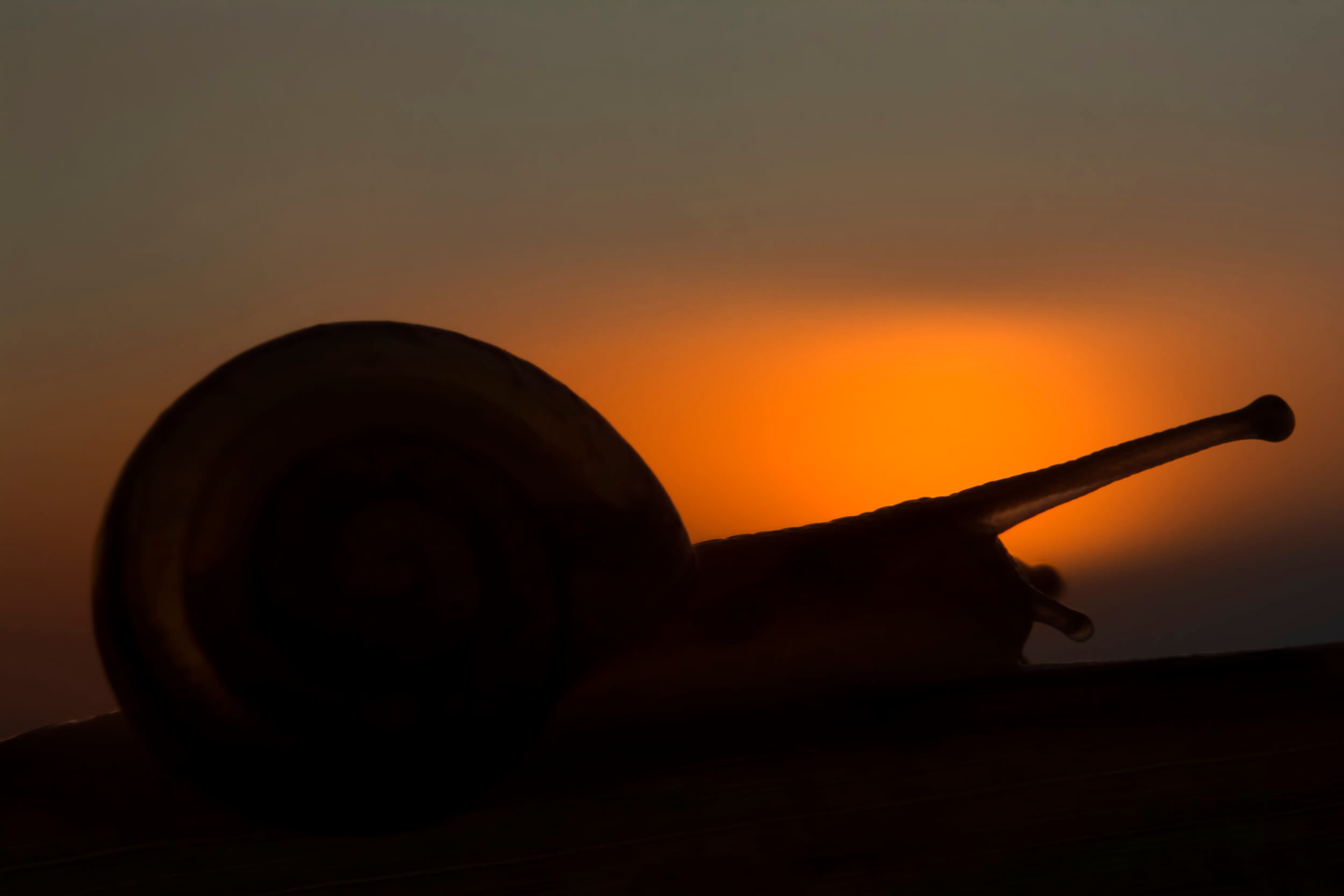 Ślimak w cieniu zachodzącego słońca