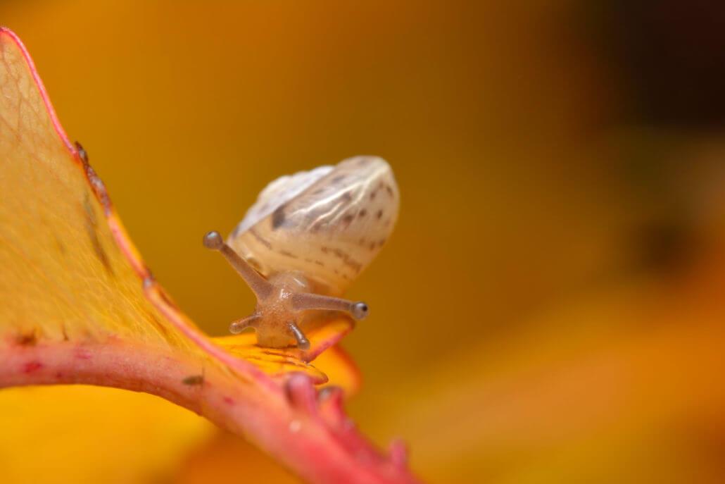 Ślimak na jesiennym liściu