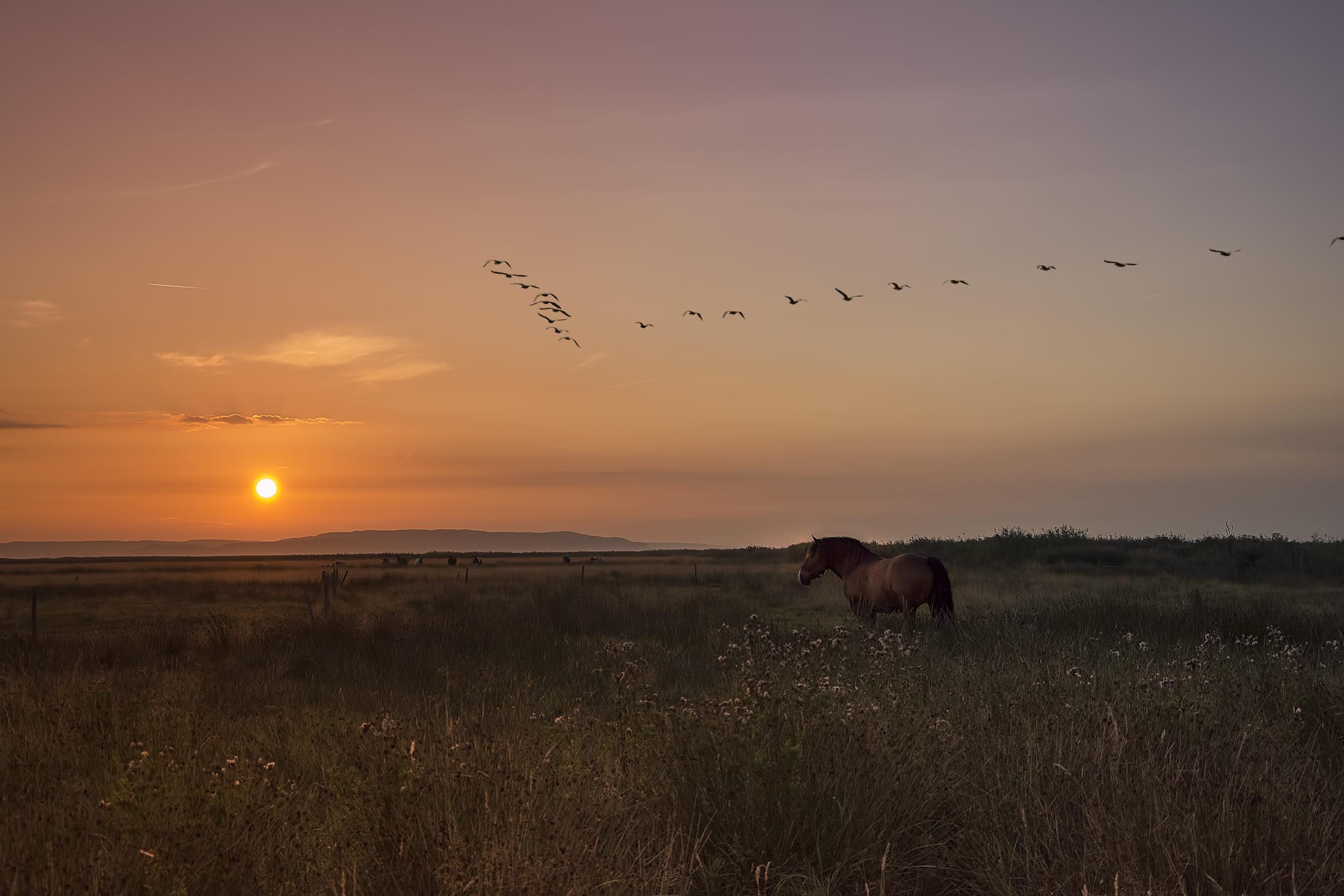 birds, hours