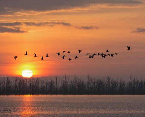 birds, sun rise, sunset