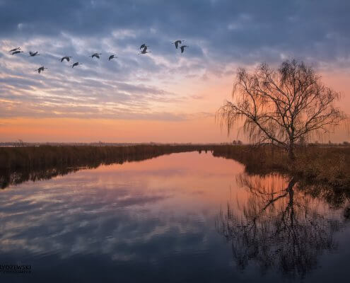 tree reflection, birds