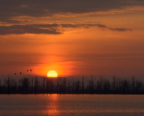 birds on sunset orange sky, sunset,