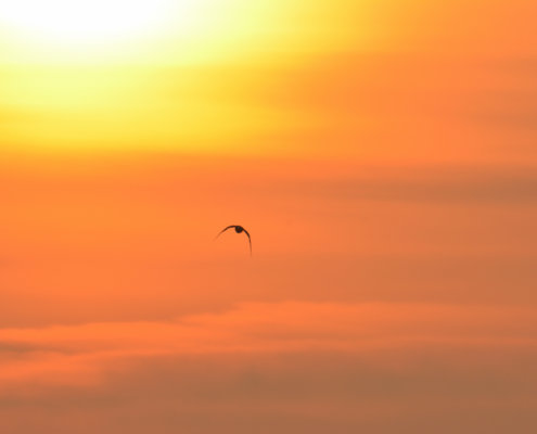 bird in orange sky, sunset sunrise