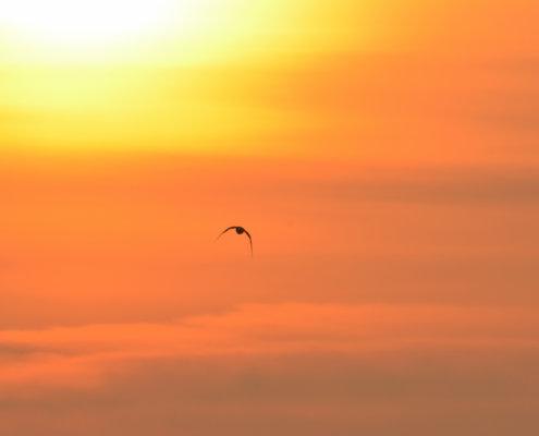 bird in orange sky, sunset sunrise