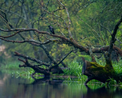 Tree branches, water and bird, nature photography bird
