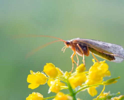 Macro photography, insect, bug, yellow flowers, wild life, long bug