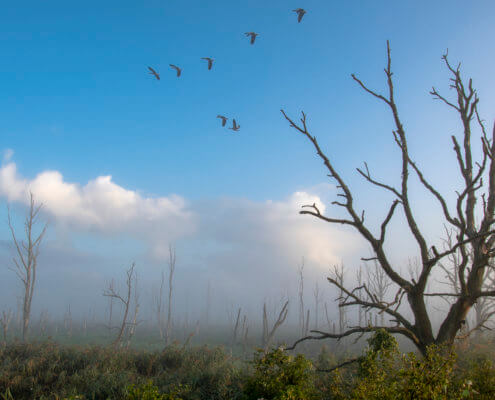 birds over mystic dead forest, nature photography