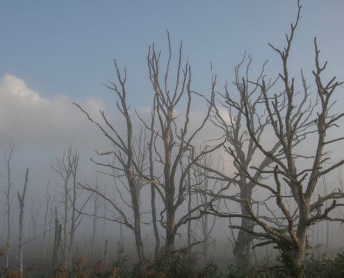 fog in Dead forest trees in dead forest, nature photography
