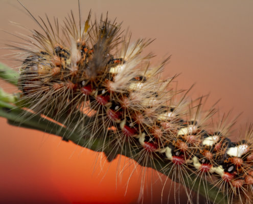 Caterpillar, macro photography, close up, wildlife, bug, insect, small, nature photography, Artur Rydzewski