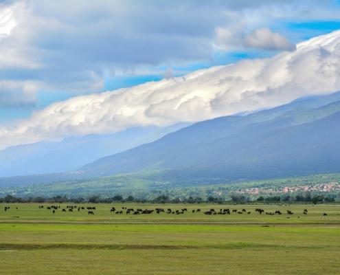 Kerkini, kerkinie lake, hills, mountain, clouds, sky, blue sky, green, fields, animals, mammals, buffalo, cows, nature, eco, Artur Rydzewski