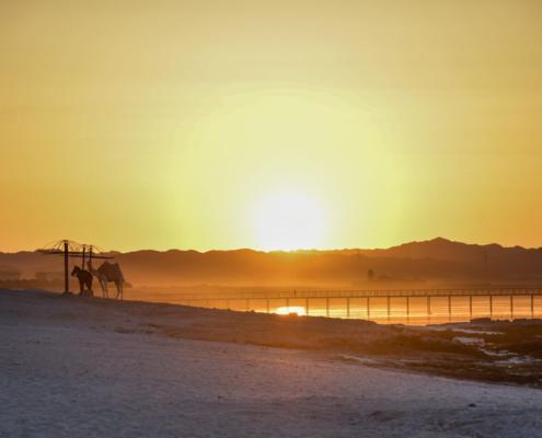 camel on the beach, camel, sunset, sunrise, sun, beach, sky, Africa, Egypt