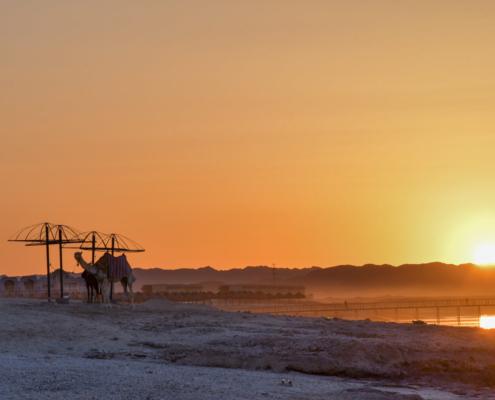 camel on the beach, camel, sunset, sunrise, sun, beach, sky, Africa