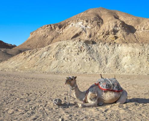 camel, africa, desert, Egypt, egipt, Africa, Afryka, wielbłąd, pustynia
