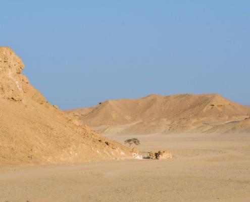 Tree in the desert, tree, desert, hills, mountain, no people